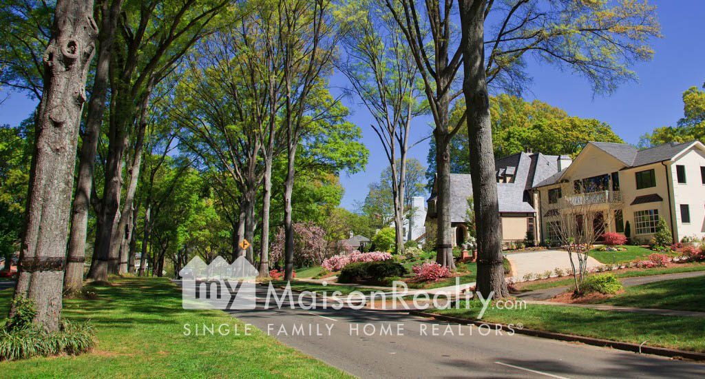 Majestic Tree-line Streets of myers Park